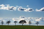 stock photo of row trees  - row of trees on the field as silhouettes against a blue sky with clouds landscape background - JPG
