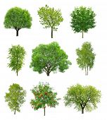 picture of greenery  - Great collection of deciduous trees isolated on white background - JPG