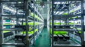 image of hydroponics  - Plants are cultivated in hydroponic system - JPG