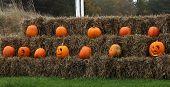 stock photo of hay bale  - a row of pumpkins on hay bales - JPG