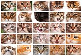 foto of cute animal face  - Cute cats and pretty kittens faces collage - JPG