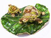 Feng shui turtles