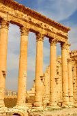 pic of euphrat  - historic columns of ancient palmyra in syria - JPG