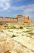 stock photo of euphrat  - historic temple at ancient palmyra in syria - JPG