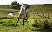 Horse In Motion, Equus Ferus Caballus