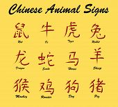 Chinese Animal Signs poster