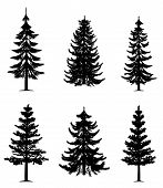 stock photo of conifers  - Collection of 6 pine trees on isolated white background - JPG