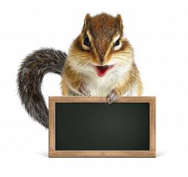 stock photo of laughable  - Funny squirrel hold blank blackboard on white - JPG
