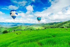 picture of rice  - Balloon flying on rice field - JPG