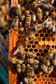 pic of honeycomb  - Busy bees close up view of the working bees on honeycomb - JPG