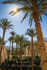 pic of oasis  - Some palmtrees with sun houses and mountings on backrgound - JPG