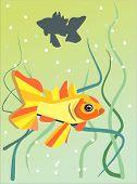 Gold Fish Swimming
