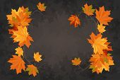 Autumn Maple Leaves On The Branches Of Trees Fallen Leaves Falling Leaves Rowan poster