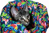 Crinkle Cat