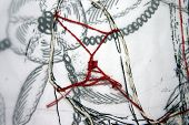 pen drawing on trasparent paper with red string