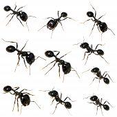 10 Black Ants