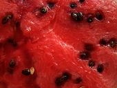 Red water-melon with seeds. Macroshooting.