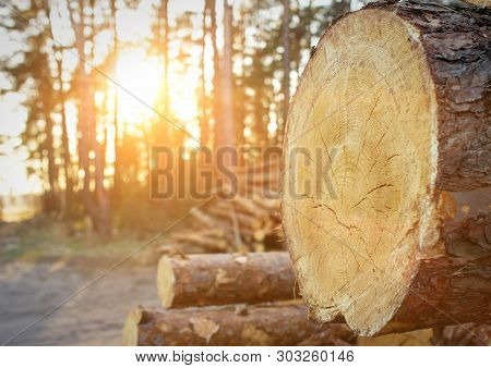 poster of Logging Of Logs In The Forest, Logs In The Forest Against The Backdrop Of A Sunset, Copy Space, Wood