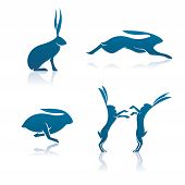 Hare Icons
