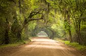 stock photo of backwoods  - Charleston SC Dirt Road Forest Botany Bay Plantation Spanish Moss Edisto Island Deep South Live Oak Trees - JPG
