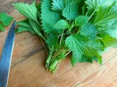 Stinging Nettle Leaves Bunch & Knife On Wooden Background. Beautiful Spring Young Nettle. Top View F poster