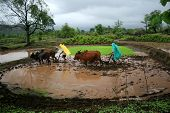 Two Indian Farmers with Oxen