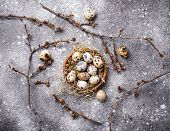 Quail Eggs And Pussy Willow On Grey  Background poster