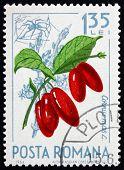 Postage stamp Romania 1964 Cornelian Cherries, Cornus Mas