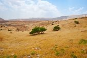 picture of samaria  - Meandering Road in Sand Hills of Samaria Israel - JPG