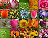 Flor cartão colagem