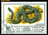 Vintage  Postage Stamp. Cottonmouth Ordinary.
