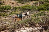 Donkey on Gramvousa island, Crete, Greece