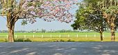 stock photo of lapacho  - Pink Trumpet Blossom In front Of Green Field - JPG