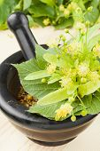 Mortar And Pestle With Linden Flowers, Herbal Medicine