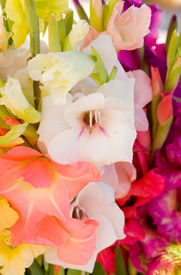 pic of gladiola  - Close up of bouquet of different gladiola blossom