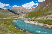 Cows pasturing near turquoise river, Tien Shan