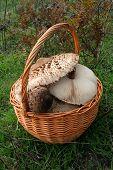 Basket of fungi