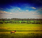 Vintage retro hipster style travel image of spring summer background - green grass field meadow scenery lanscape under blue sky with grazing horse