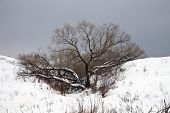 stock photo of ravines  - A tree without leaves in a ravine covered with snow - JPG