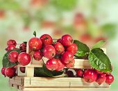 Crab Apple fruits heap in wooden box crate