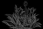 Editable vector sketch illustration of tulip plants