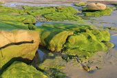 foto of lien  - Moss on stones in the morning at Co Thach beach  - JPG