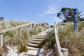 Walkway leading through sand dune to the beach