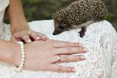 Hands Of A Bride With Ring And Hedgehog