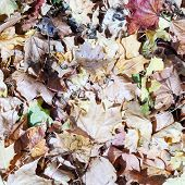 dry leaves on the floor in autmn