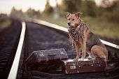 image of dog-house  - Dog on rails with suitcases - JPG
