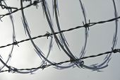 Razor Wire And Barbed Wire