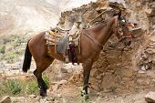 Saddled Up Mexican Horse
