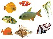 illustration with fish collection isolated on white background
