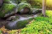 Landscape in park. Nature composition.